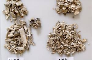 crematieresten geïdentificeerd
