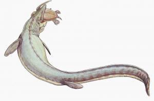 nauwkeurigheid van fossiel dateren Dead Man dating di Lori HUBAUT